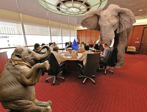 elefante na sala 500 web