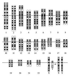 genoma-humano-300-web.png
