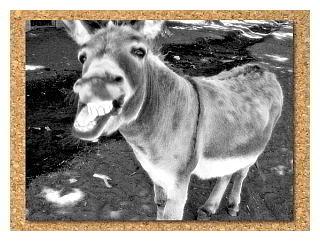 burro-classico-320-web.jpg