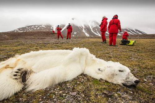 urso-polar-500-web.jpg