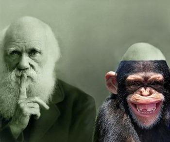 darwin macaco web