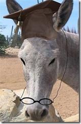 burro-com-oculos-300-web